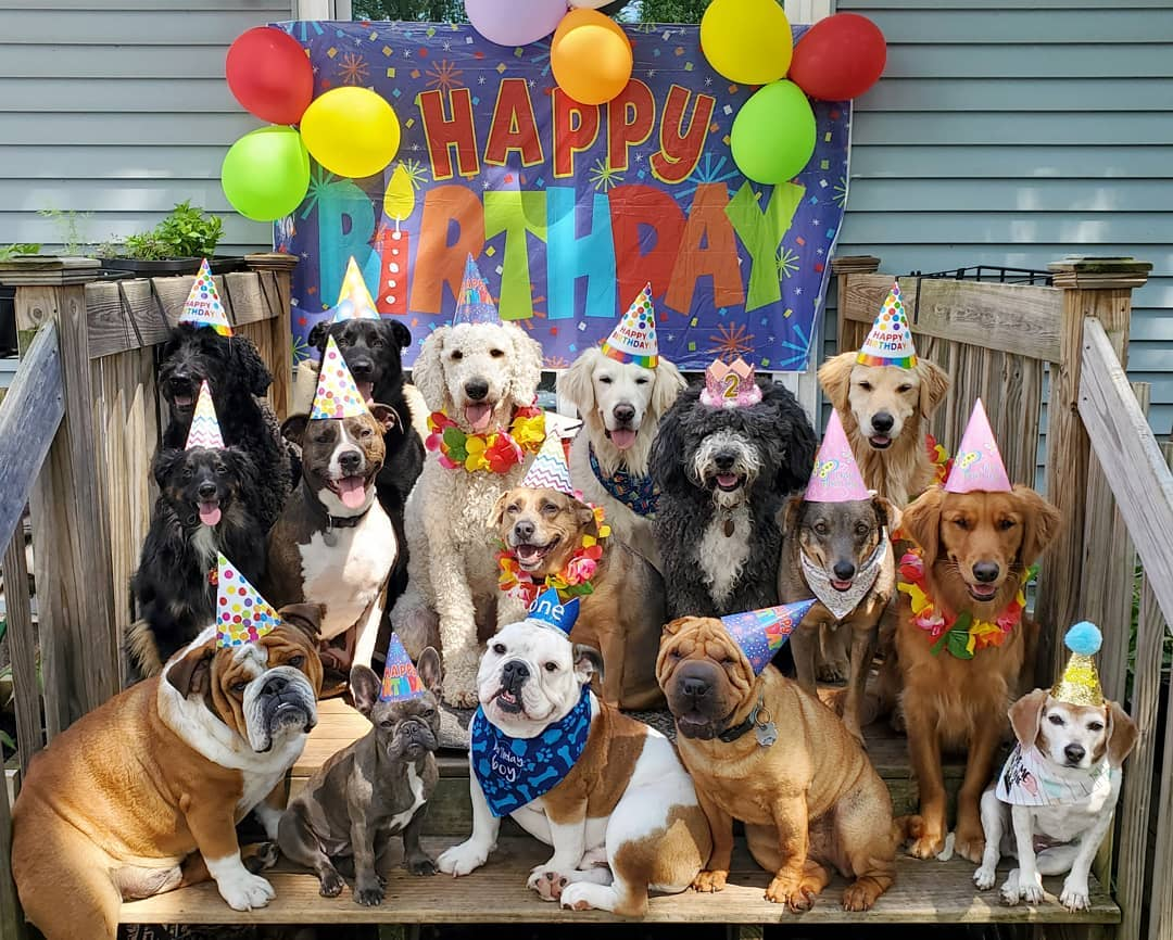 dog birthday party 2